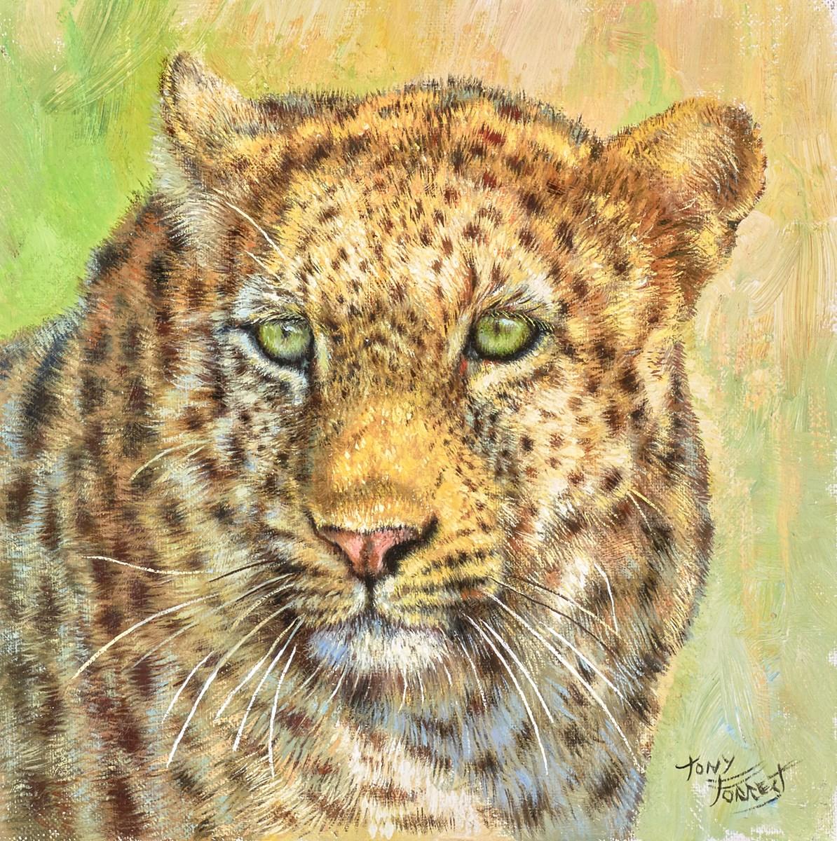 Leopard, Maasai Mara III